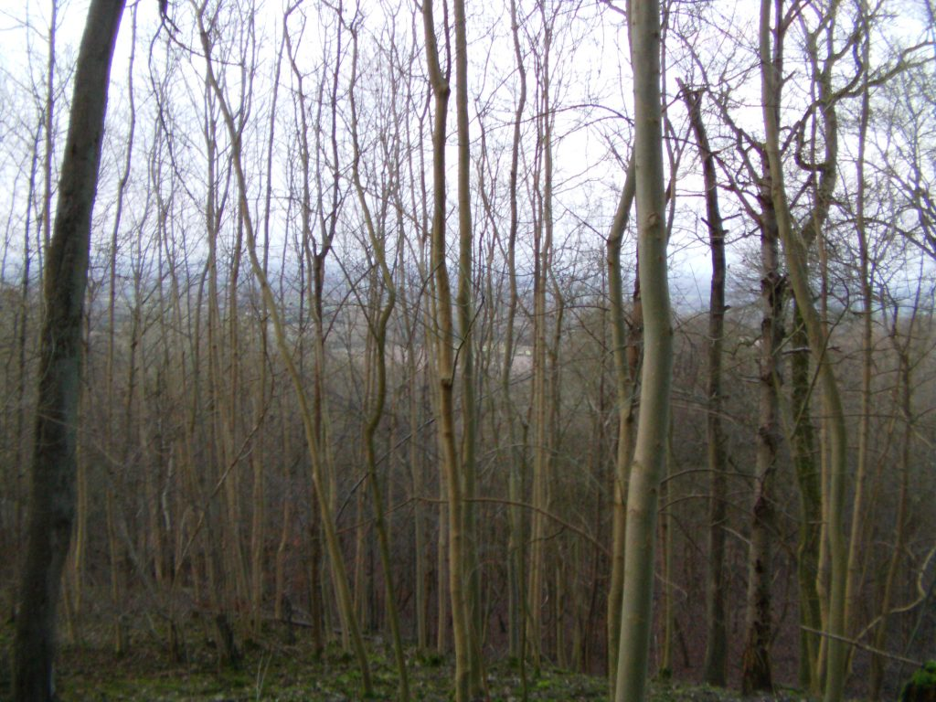Forestry coppice