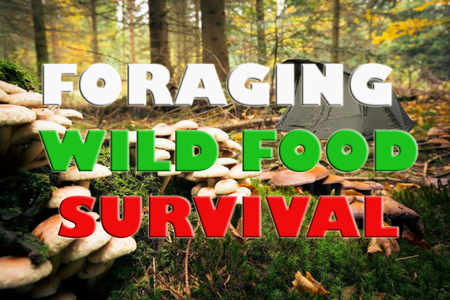 Foraging wild food for survival